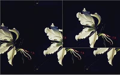 Digital Art - Backlit Flower Art by Sheila Mcdonald