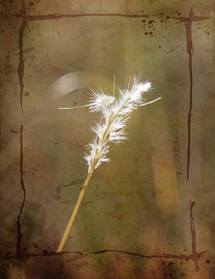 Photograph - Backlit Grass by Kathy Adams Clark