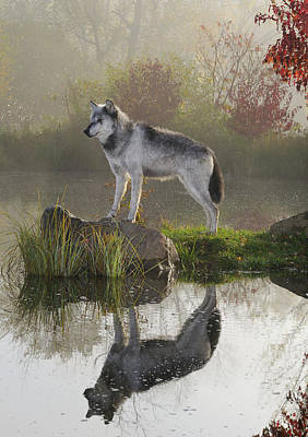 Dog Photograph - Backlit Gray Wolf Standing On Rock Over Still Water At Dawn With by Reimar Gaertner