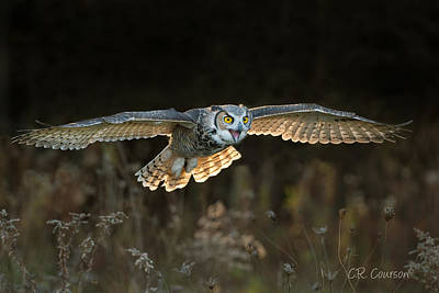 Photograph - Backlit Great Horned Owl by CR  Courson