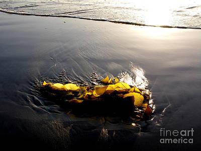 Backlit Kelp Art Print by PJ  Cloud