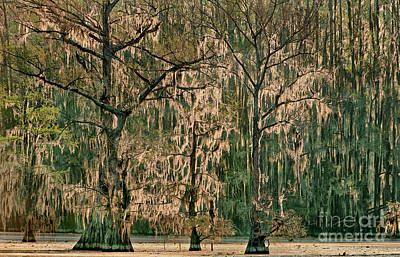 Photograph - Backlit Moss-covered Trees Caddo Lake Texas by Dave Welling
