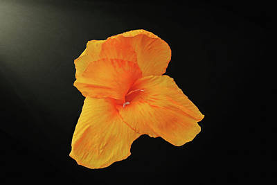 Abstract Graphics - Backlit Orange Petals by Dennis Buckman