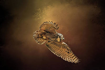 Photograph - Backlit Owl by Donna Kennedy