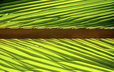 Palm West Art Print