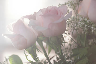 Photograph - Backlit Pink Roses by Joni Eskridge