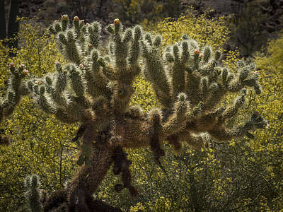 Photograph - Backlit Prickly by Jean Noren