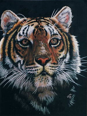 Drawing - Backlit Tiger by Barbara Keith