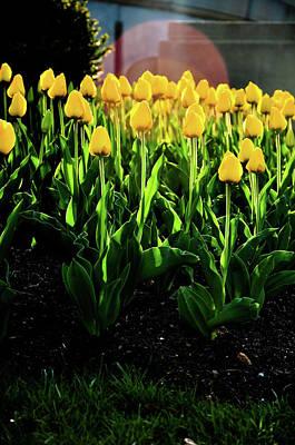 Photograph - Backlit Tulips by Scott Sawyer