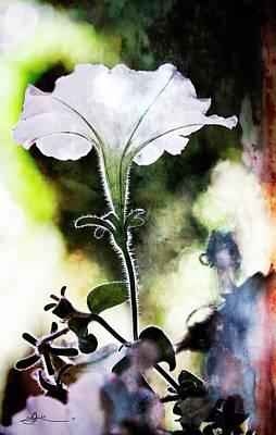 Pyrography - Backlit White Flower by Bill Linn