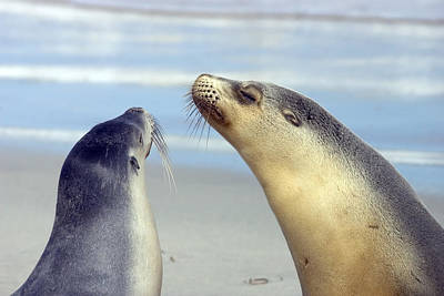 Sea Lions Photograph - Backtalk by Mike  Dawson
