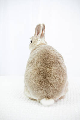 Photograph - Backward Facing Bunny by Jeanette Fellows