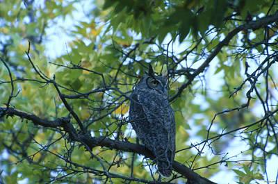 Backward Glance - Great-horned Owl - San Rafael Wilderness Art Print
