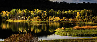Trees Reflecting In Water Photograph - Backwater Blacks At Oxbow Bend by TL Mair