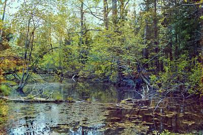 Photograph - Backwoods by John Rivera