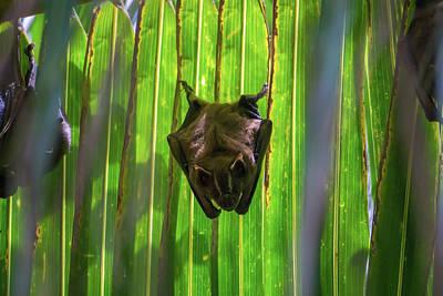 Photograph - Backyard Bat by John Pierpont