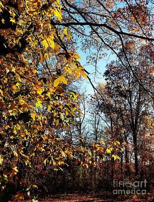Photograph - Backyard Beauty by Maria Urso