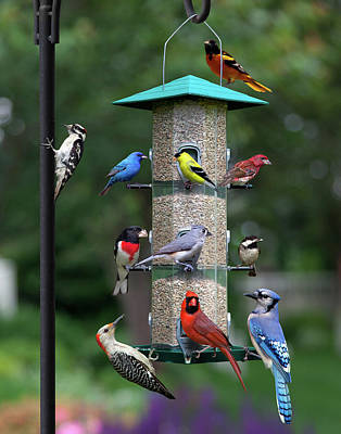 Photograph - Backyard Bird Feeder by Larry Landolfi