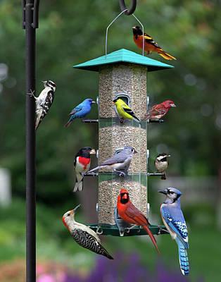 Photograph - Backyard Bird Feeder by Larry Landolfi