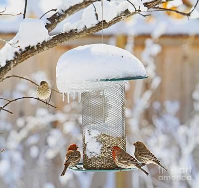 Photograph - Backyard Birds by Betty Morgan