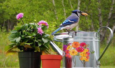 The Blue Dahlia Photograph - Backyard Bloomers by Karen Cook