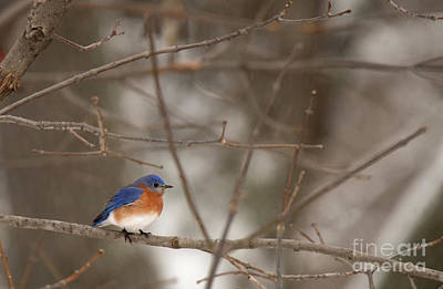 Photograph - Backyard Blue by Ed Taylor