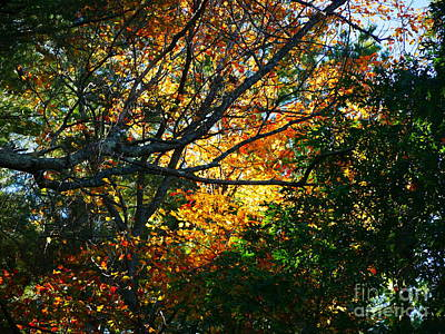 Photograph - Backyard Fall by Nancie DeMellia