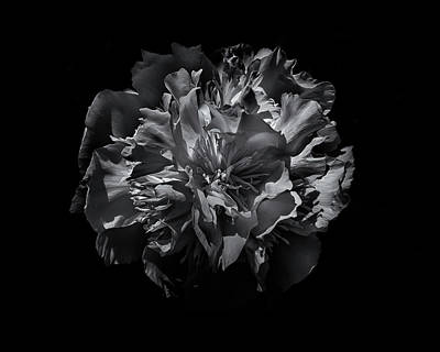 Art Print featuring the photograph Backyard Flowers In Black And White 25 by Brian Carson