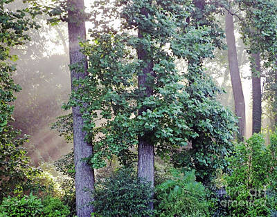 Photograph - Backyard Forest Atlanta 3 by Lizi Beard-Ward
