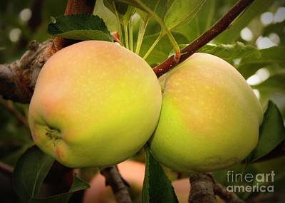 Food And Beverage Royalty-Free and Rights-Managed Images - Backyard Garden Series - Two Apples by Carol Groenen