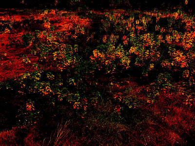 Psychological Digital Art - Backyard Lanterns by Rachel Christine Nowicki