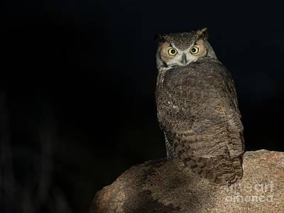 Photograph - Backyard Owl by Bryan Keil