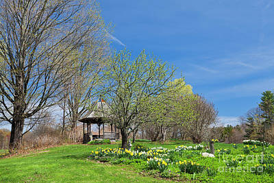 Photograph - Backyard Spring by Alan L Graham