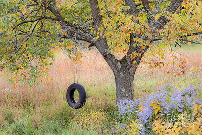 Photograph - Backyard Tree Swing by Alan L Graham