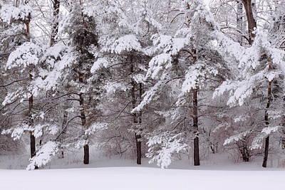 Art Print featuring the photograph Backyard Trees by Don Nieman