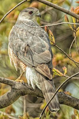 Photograph - Backyard Visitor.... by Paul Vitko