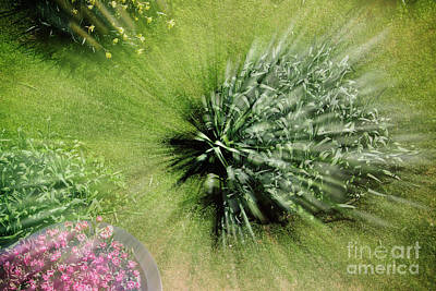 Photograph - Backyard Vortex by Ana Mireles