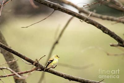 Photograph - Backyard Yellow by Ed Taylor