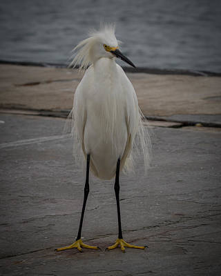 Photograph - Bad Hair And Big Feet by Ernie Echols