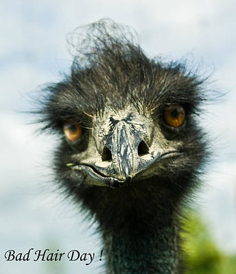 Photograph - Bad Hair Day by Douglas Barnett
