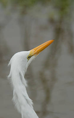 Photograph - Bad Hair Day? by Frank Madia