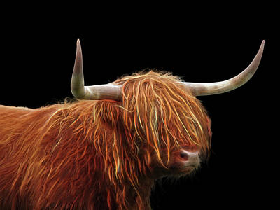 Brown Cow Photograph - Bad Hair Day - Highland Cow - On Black by Gill Billington