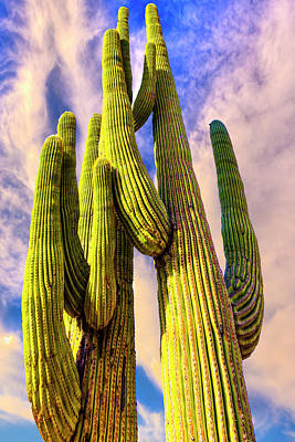Art Print featuring the photograph Bad Hombre by Paul Wear