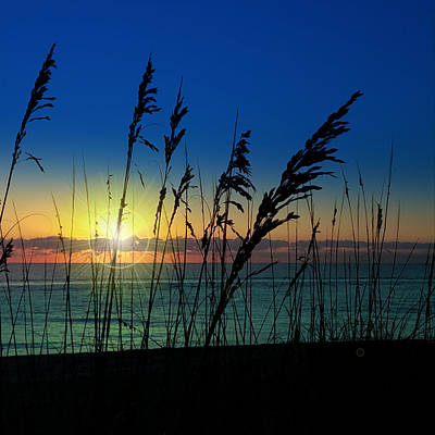Photograph - Bad Sea Oats  by Robert Francis