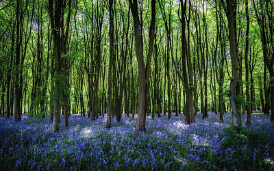 Photograph - Badbury Hill Bluebells by Framing Places