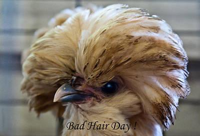 Photograph - Badddd Hair Day by Douglas Barnett