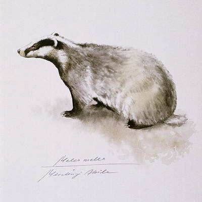 Animal Art Painting - Badger, Watercolor by Attila Meszlenyi