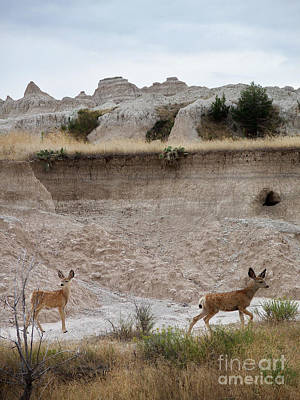 Creative Charisma - Badlands Deer SD by Tommy Anderson