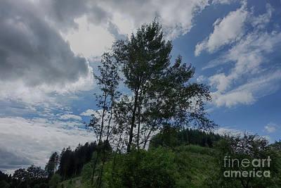 Photograph - Baeume Im Wind Trees In The Wind by Eva-Maria Di Bella