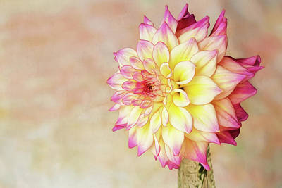 Photograph - Bahama Mama Dahlia by Mary Jo Allen